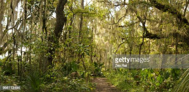 bolen bluff trail, paynes prairie preserve state park, florida usa - gainesville florida stock photos and pictures