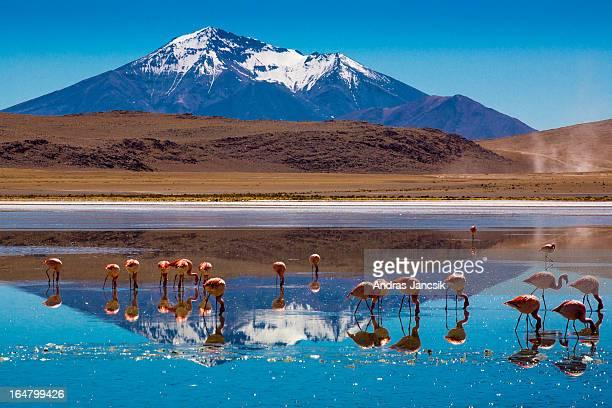 bolivian altiplano - bolivia foto e immagini stock