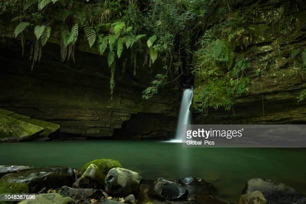 bom retiro - brasilien (cachoeira costãozinho) - mata atlantica stock-fotos und bilder