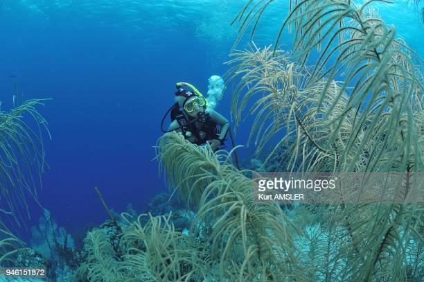 Bonaire, Caribbean, Underwater landscape.