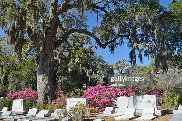 Bonaventure Cemetery in Savannah of Georgia