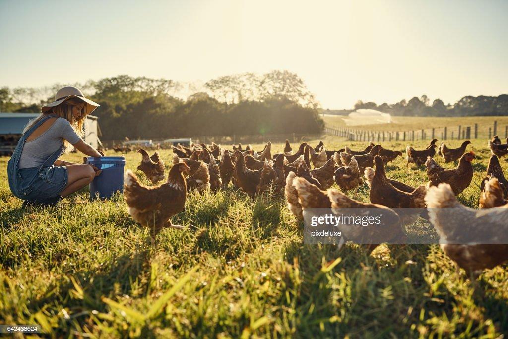 Bindung mit ihrer Herde : Stock-Foto