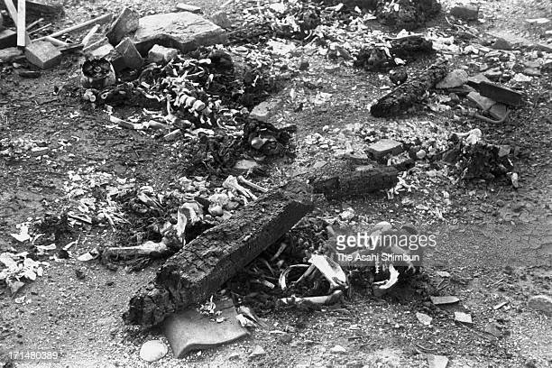 Bones and ashes left after cremation of Nagasaki atomic bomb victims in August 1945 in Nagasaki, Japan. The world's first atomic bomb was dropped on...