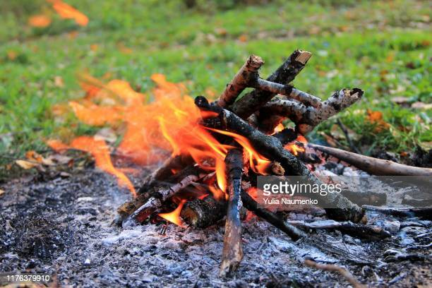 bonfire in the autumn forest. tongues of flame, burning dry branches. close up. - すす ストックフォトと画像