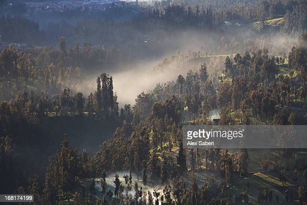 bonfire smoke and mist in a landscape near mount bromo. - alex saberi stock pictures, royalty-free photos & images
