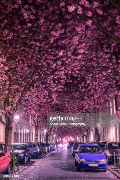 Bonn - Germany