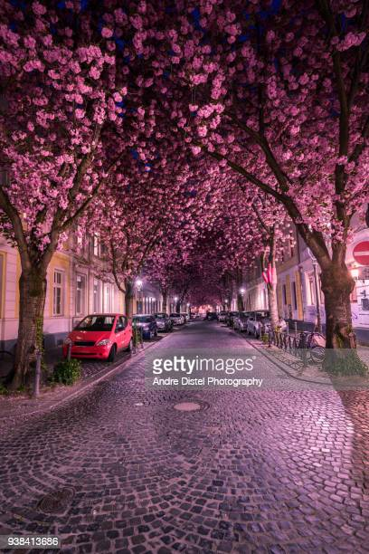 bonn - germany - baum stock pictures, royalty-free photos & images