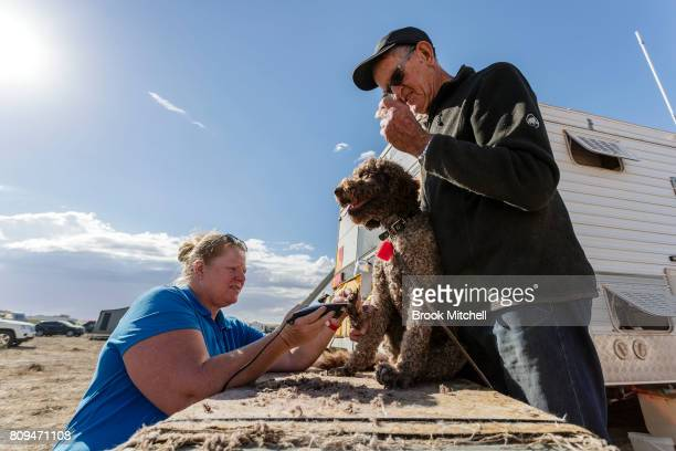 Bonnie a Labradoodle from Melbourne gets a haircut at the The Birdsville Big Red Bash 2017 on July 6 2017 in Birdsville Australia