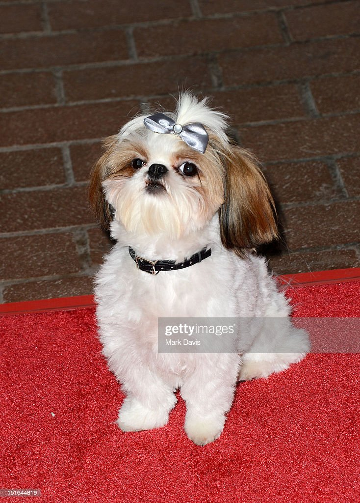 Bonnie the Dog attends 'Seven Psychopaths' premiere during the 2012 Toronto International Film Festival at Ryerson Theatre on September 7, 2012 in Toronto, Canada.
