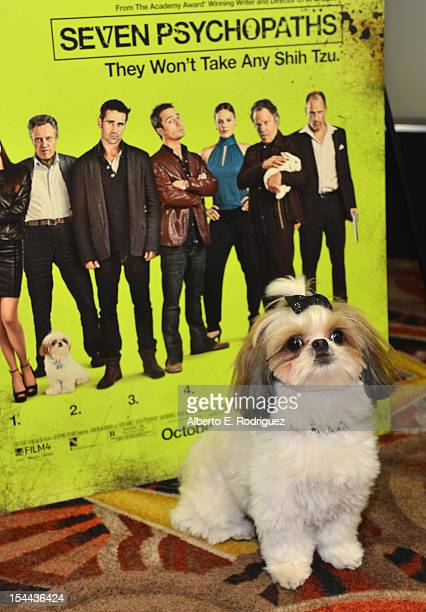 Bonny the ShihTzu attends a screening of CBS Films' Seven Psychopaths celebrating the Certified Fresh Rating from RottenTomatoescom at AMC Century...