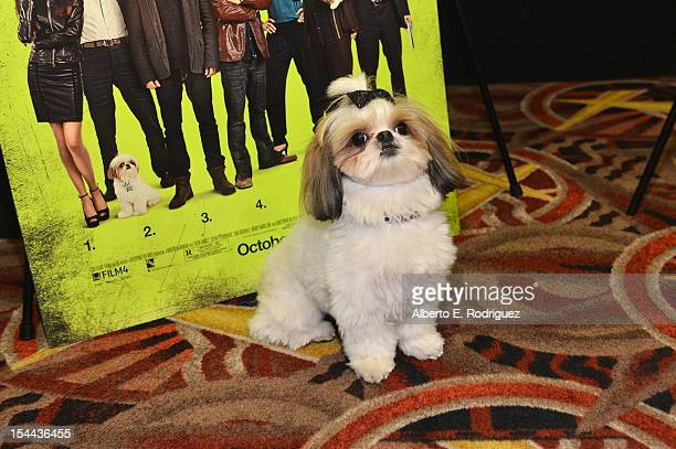 "Bonny the ShihTzu attends a screening of CBS Films' ""Seven Psychopaths"" celebrating the Certified Fresh Rating from RottenTomatoes.com at AMC Century..."