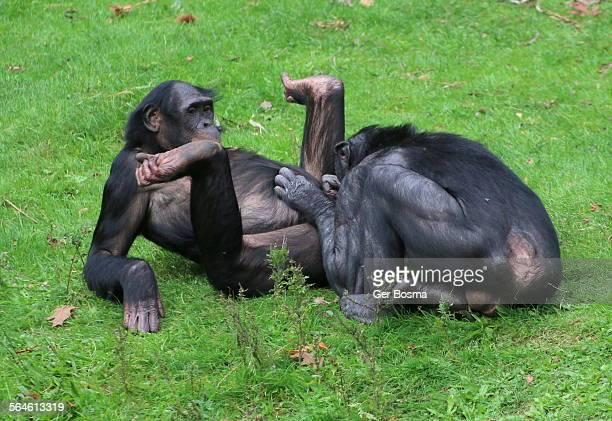 Bonobo Leisure
