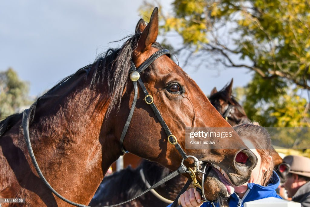 Bons Away after winning the Marios Bar at the Grand BM64 Handicap at Mildura Racecourse on August 18, 2017 in Mildura, Australia.