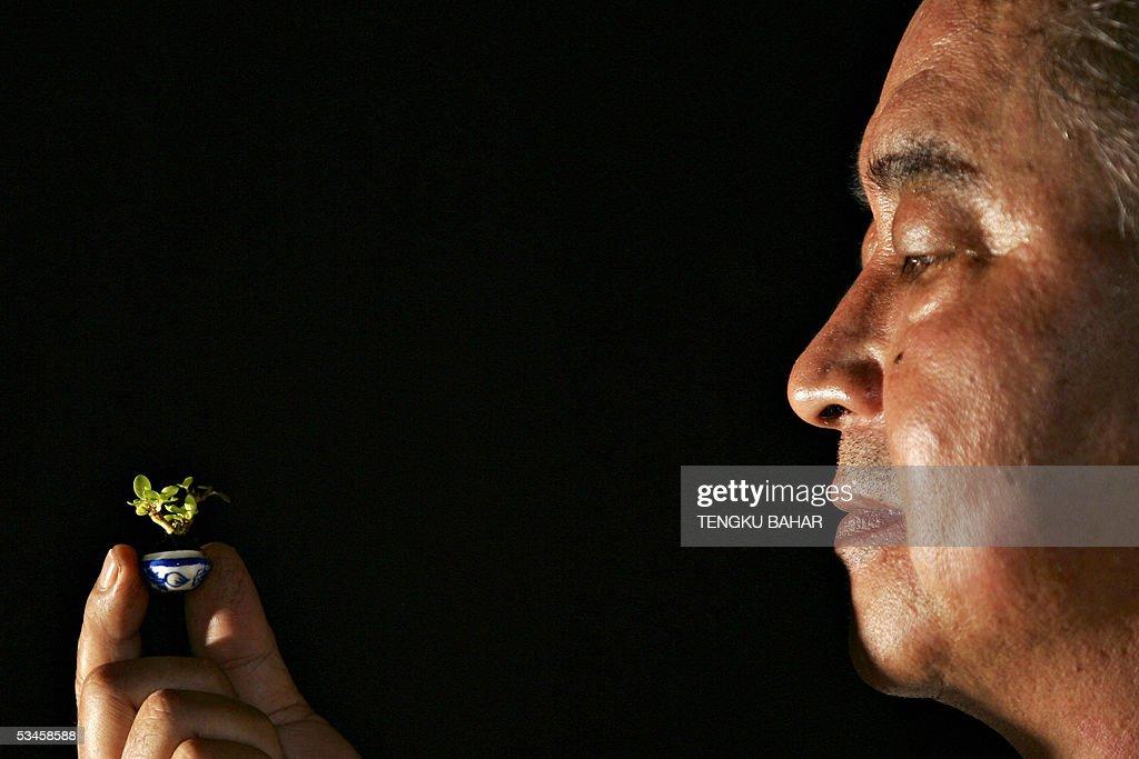 Bonsai enthusiast Kuah Tee Teong, 53, ho : ニュース写真