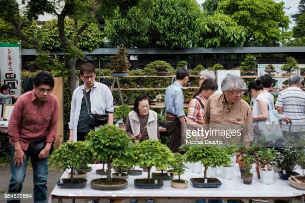 Bonsai enthusiasts look at bonsai during the Bonsai Matsuri on May 3 2018 in Saitama Japan The Omiya Bonsai Village in Saitama founded in 1925 is one...