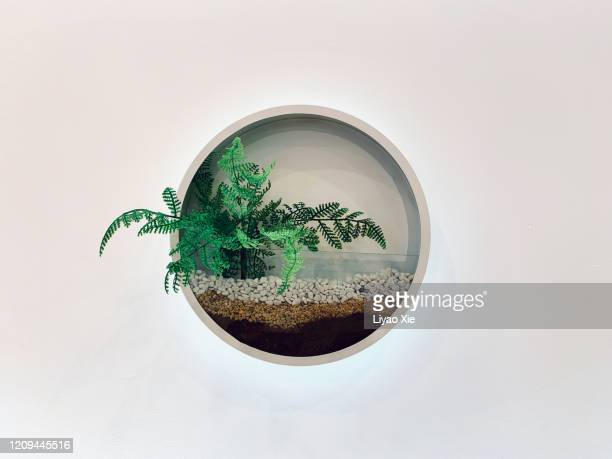 bonsai on the wall - liyao xie stock pictures, royalty-free photos & images