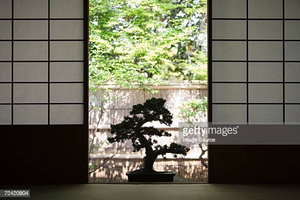 bonsai - bonsai tree stock pictures, royalty-free photos & images
