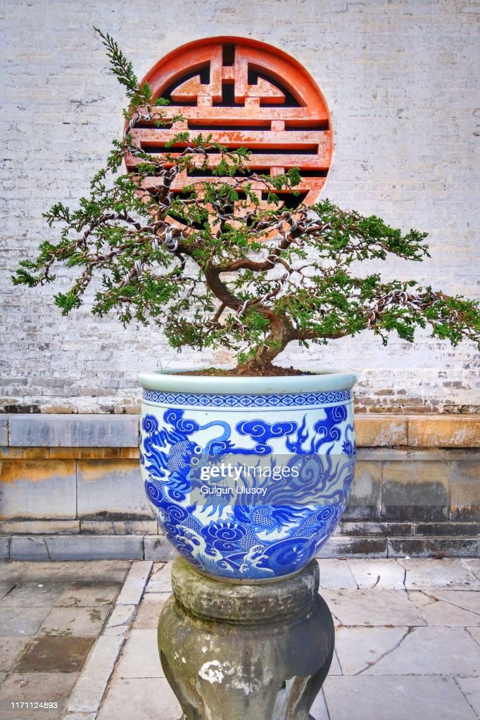 Bonsai Tree In Ceramic Vase Imperial City Hue Vietnam High Res Stock Photo Getty Images