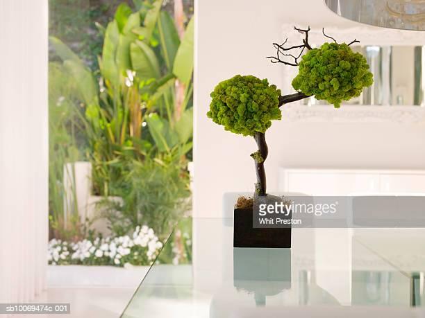 Bonsai tree on glass table