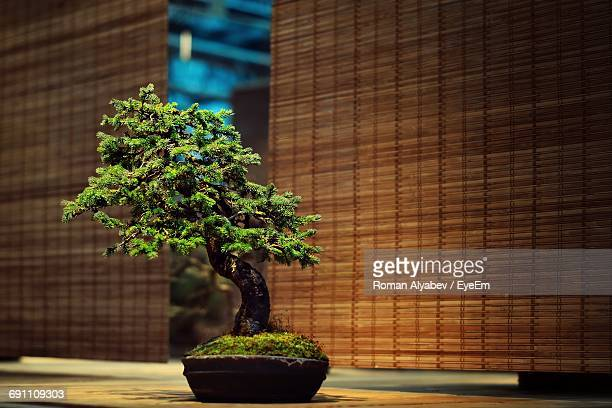 bonsai tree on place mat - bonsai tree stock pictures, royalty-free photos & images