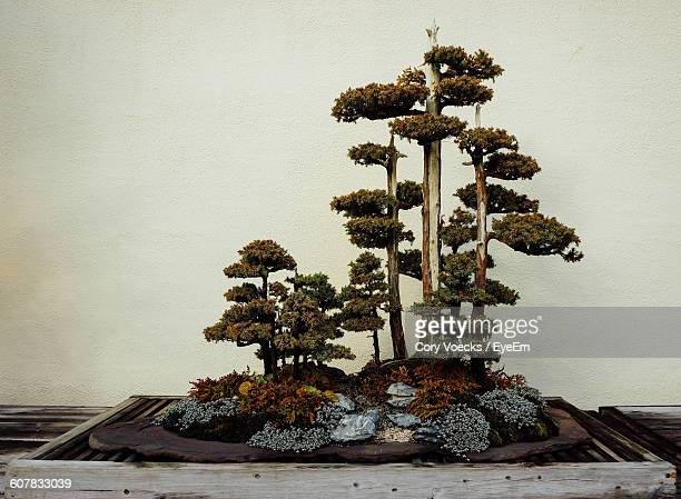 bonsai tree on wooden table against wall - bonsai tree stock pictures, royalty-free photos & images