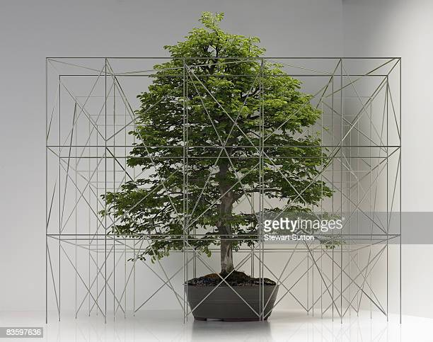 bonsai tree with miniature scaffolding