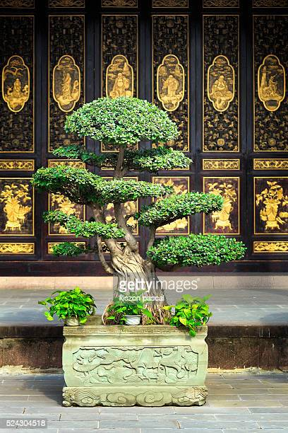 Bonzai in a Buddhist temple in China