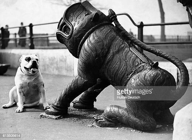 Bonzo Adair a bulldog sits and looks bemused before a Chinese cannon shaped like a great beast The cannon was on show at the Tower of London London...