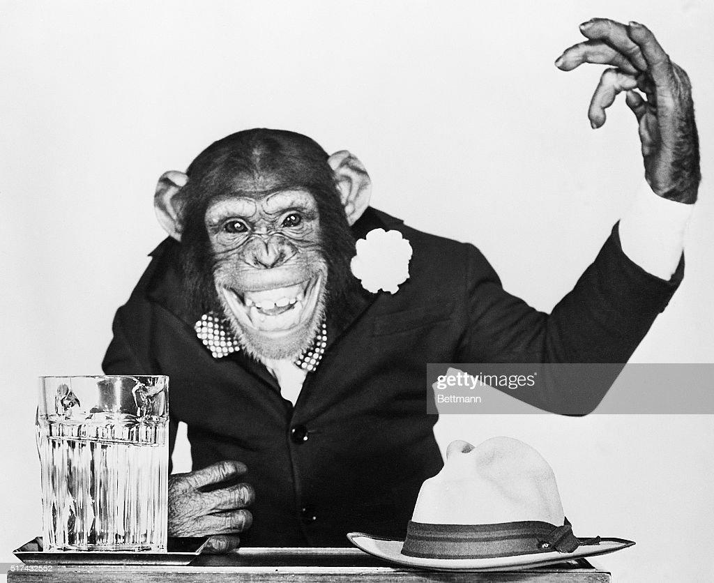 Bonzo the Chimp Campaigning : News Photo