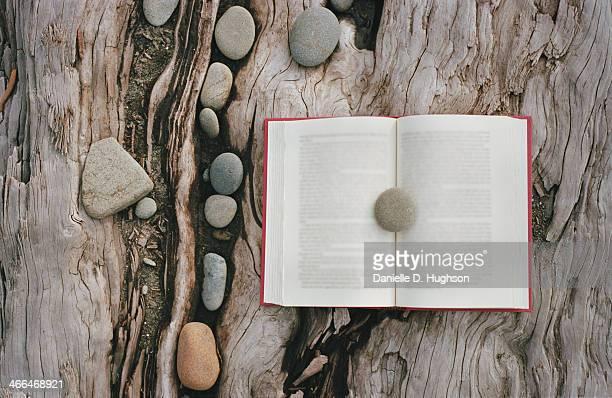 Book lying on driftwood
