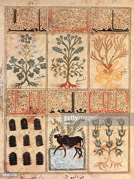 """Book of antidotes : medicinal plant, arab miniature from """"Theriaque"""" by Galien, 12th century"""