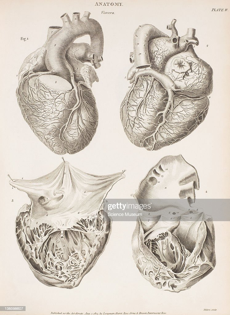 Anatomy Rees Cyclopaedia Pictures Getty Images