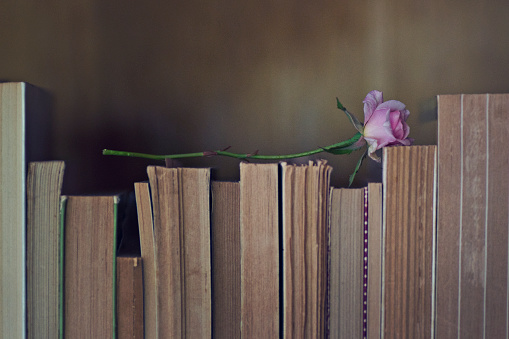 Books and rose - gettyimageskorea