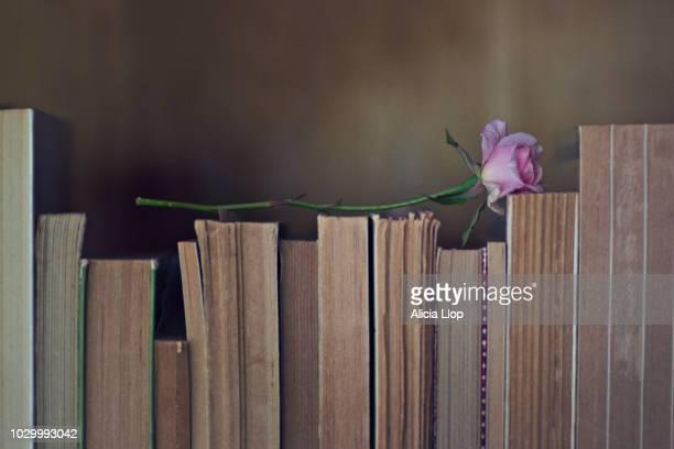 books and rose - ロマン主義 ストックフォトと画像