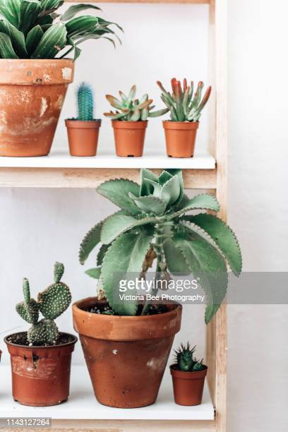 bookshelf with succulent and various houseplants over wall - juicy stock pictures, royalty-free photos & images