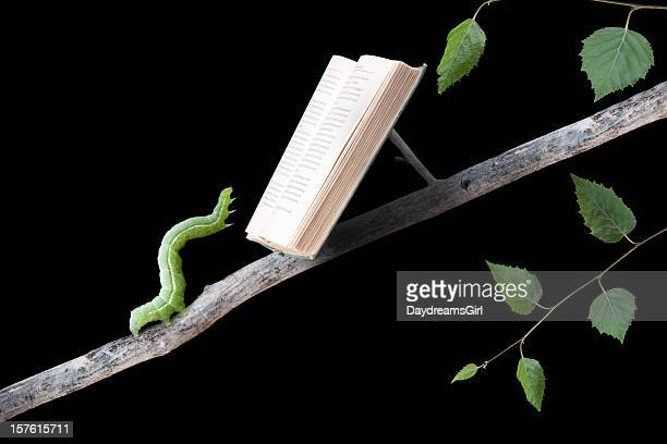 bookworm reading book - worm stock photos and pictures