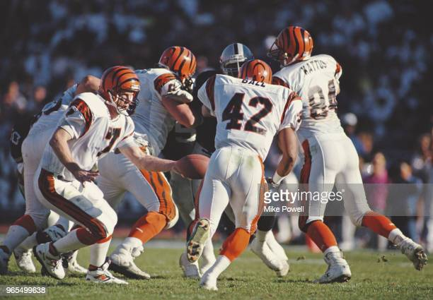 Boomer Esiason Quarterback for the Cincinnati Bengals hands off the ball to Running Back Eric Ball during the American Football Conference Divisional...