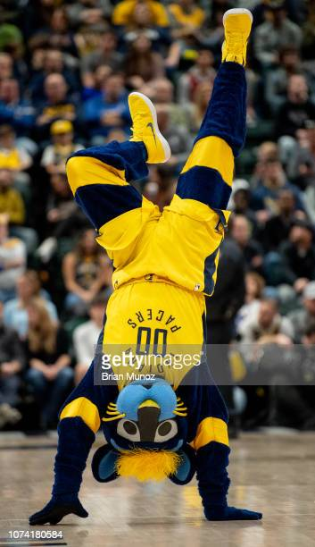 Boomer the Panther the Indiana Pacers mascot walks down the court on his hands during a time out during a game between the Indiana Pacers and the New...