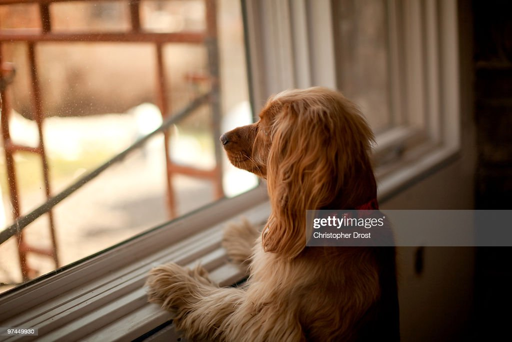 Boots at the window : Stock Photo