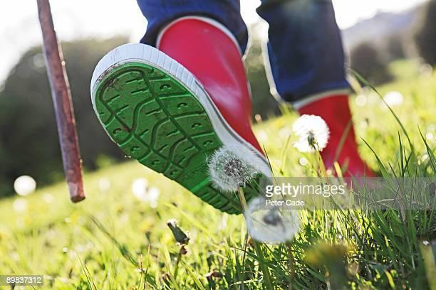 Boots walking on dandelion flower