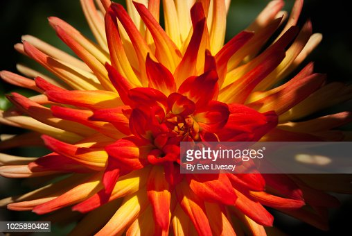 37 295 Red And Yellow Wallpaper Photos And Premium High Res Pictures Getty Images