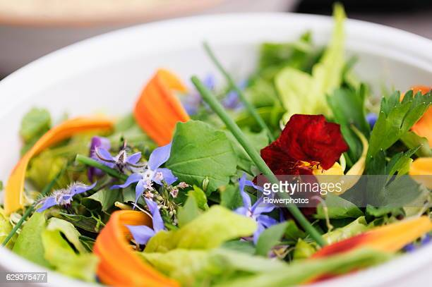 Borage Borago officinales Nasturtium Day Lily Hermerocallis petals Chives and herbs in an edible flower and herb salad in a white bowl