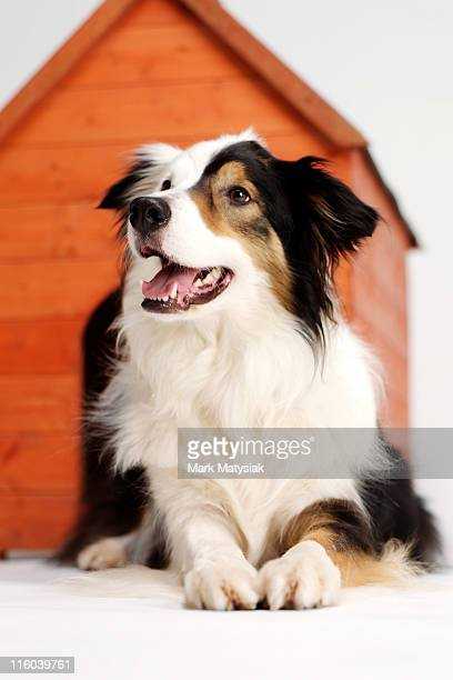 Border collie and her kennel