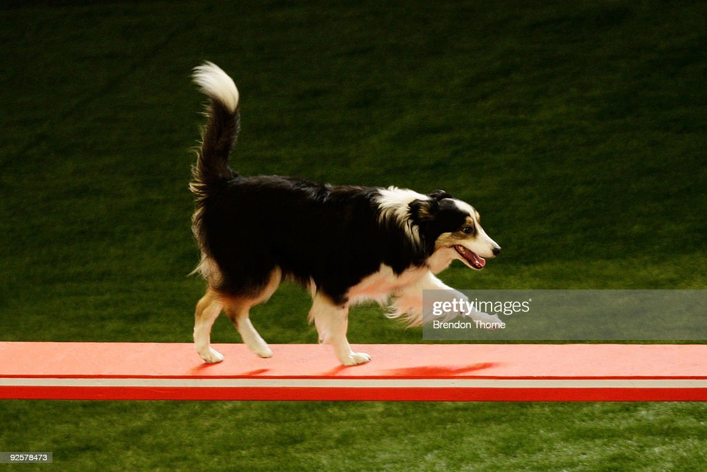The World Dog Games : News Photo