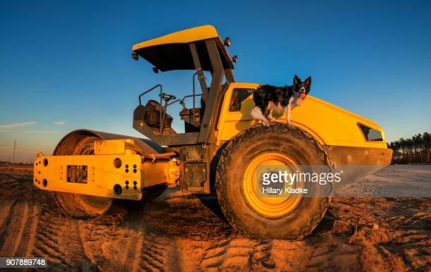 border collie stands on construction truck - cão adestrado - fotografias e filmes do acervo