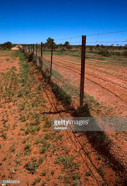 Border Dog or Dingo fence Canis dingo between Queensland and New South Wales near Tibooburra New South Wales Australia
