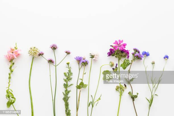 border of dainty colorful summer flowers - springtime stock pictures, royalty-free photos & images