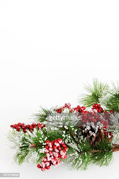 Border of Snowy Tree Branch and Holly Berries on White