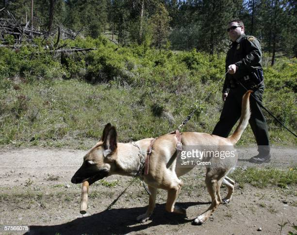 S Border Patrol Agent Brent Smith walks his Belgian Malinois dog Beau who carries a toy reward won during a training session May 9 2006 in the...