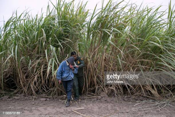 Border Patrol agent detains undocumented immigrants caught in a sugar cane field near a section of privately-built border wall under construction on...